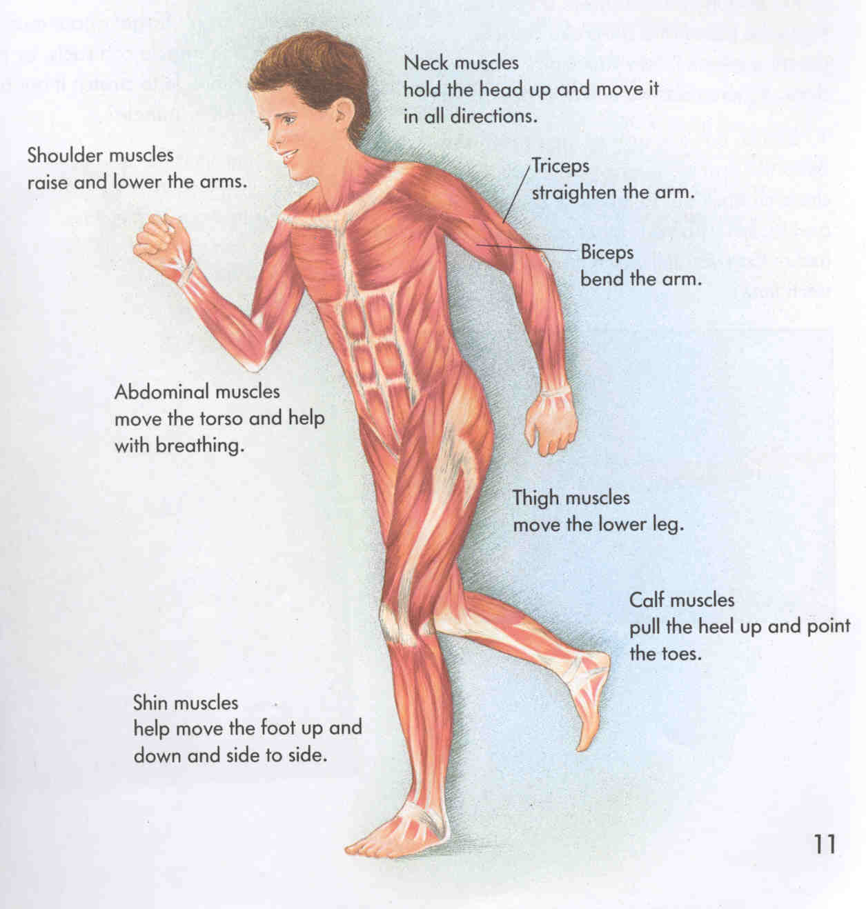 Riverview Science Placement Of The Human Body Systems